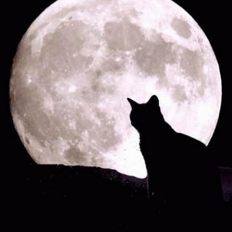 часто темная луна ава картинки даже