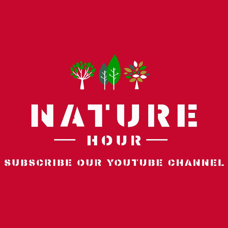 NATURE HOUR (nature-hour)