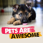 Pets Are Awesome