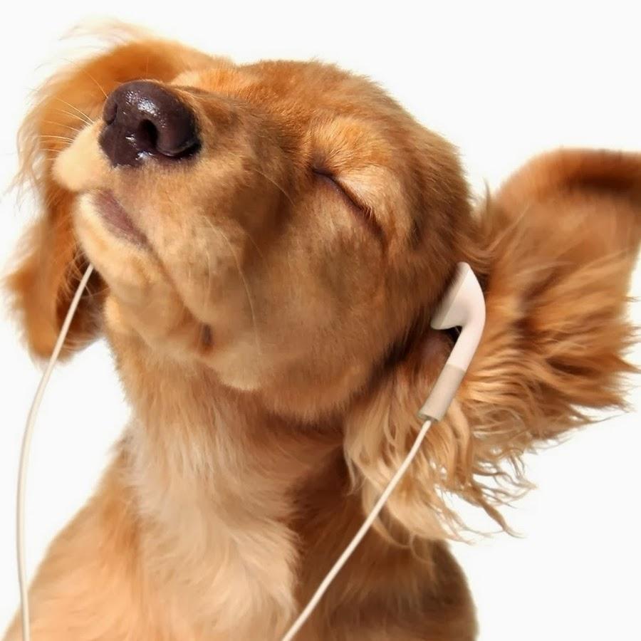 картинка собака с микрофоном рос