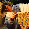 Mademoiselle Bee