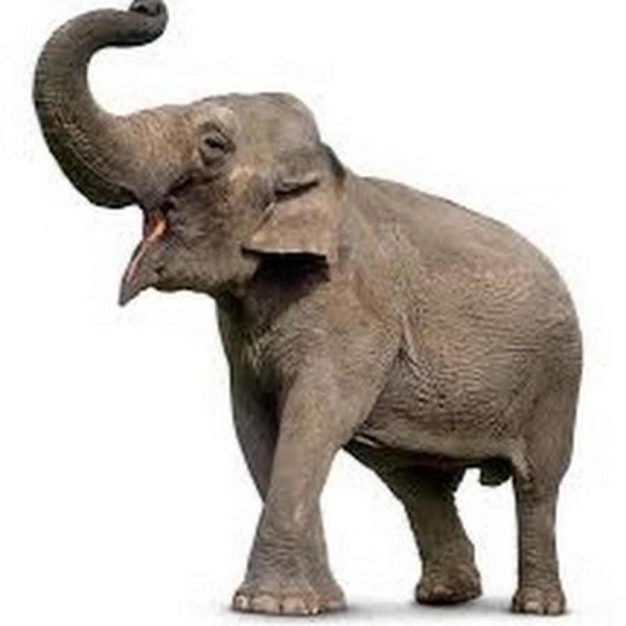 Elephanttube Con