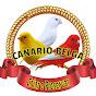 Canário Belga Criar e preservar