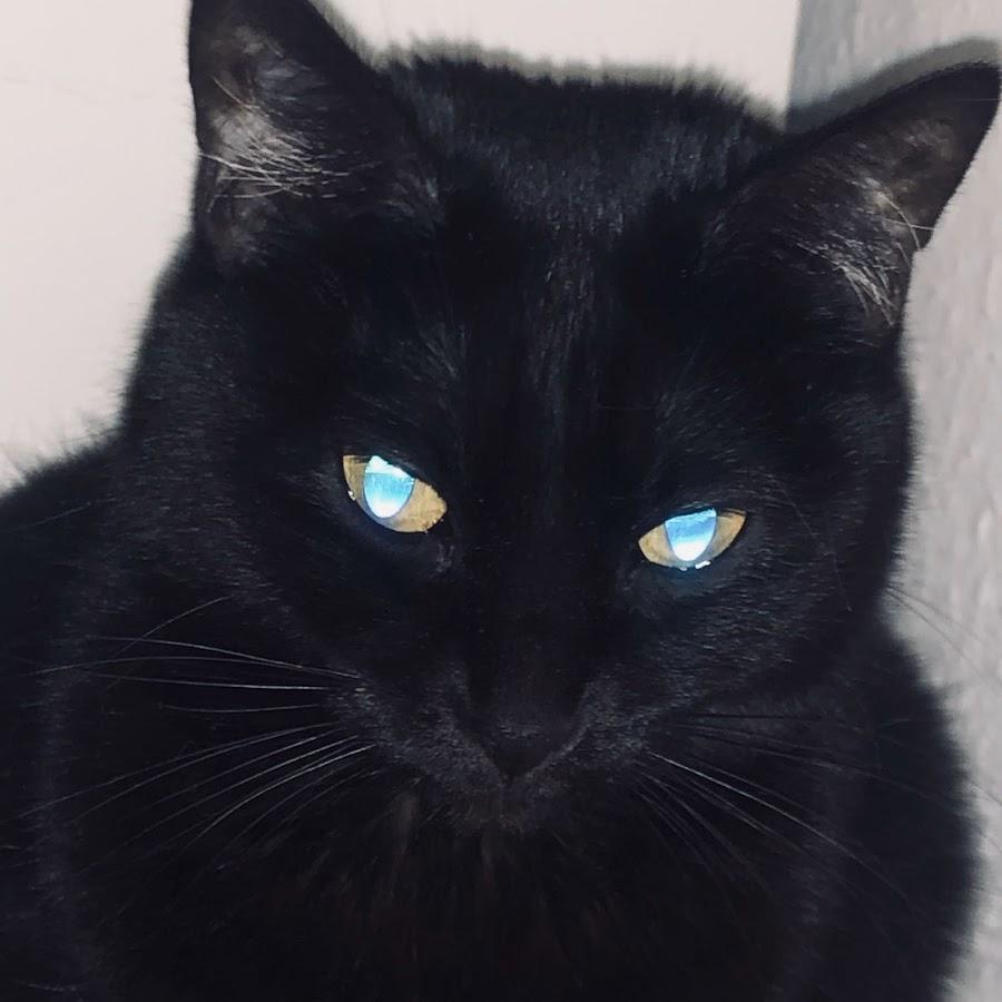 Laser Katze
