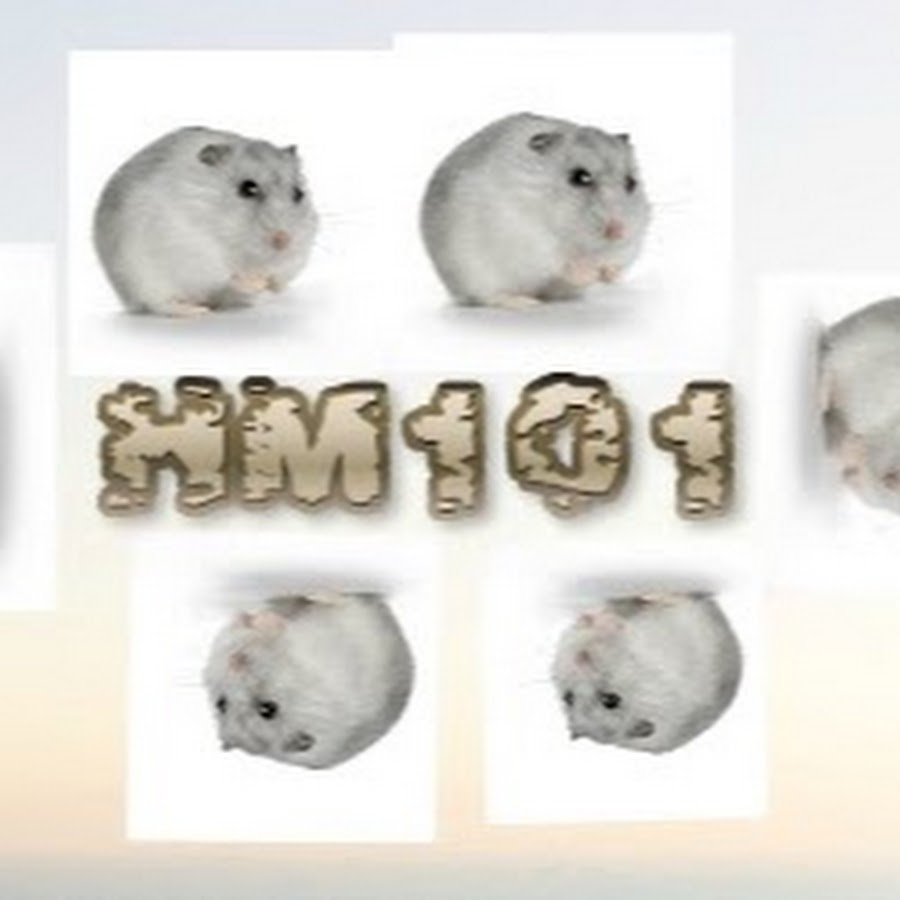 Hamster_and_men