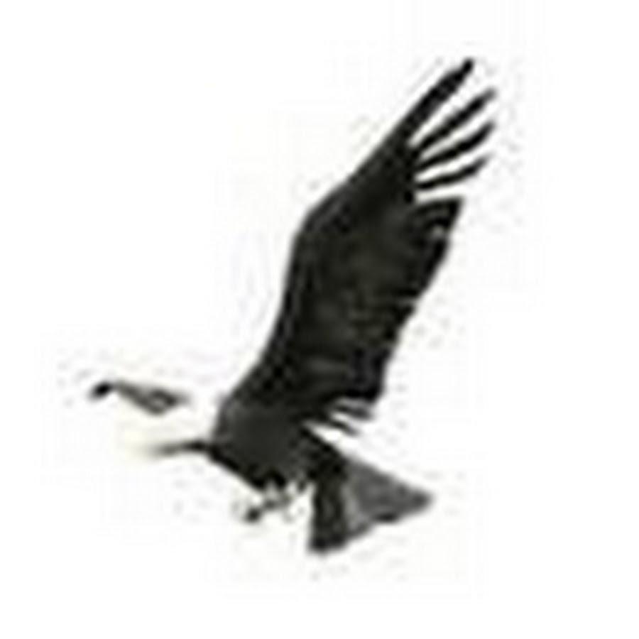 гиф орел без фона больше