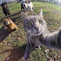 Alex's Curious Cat