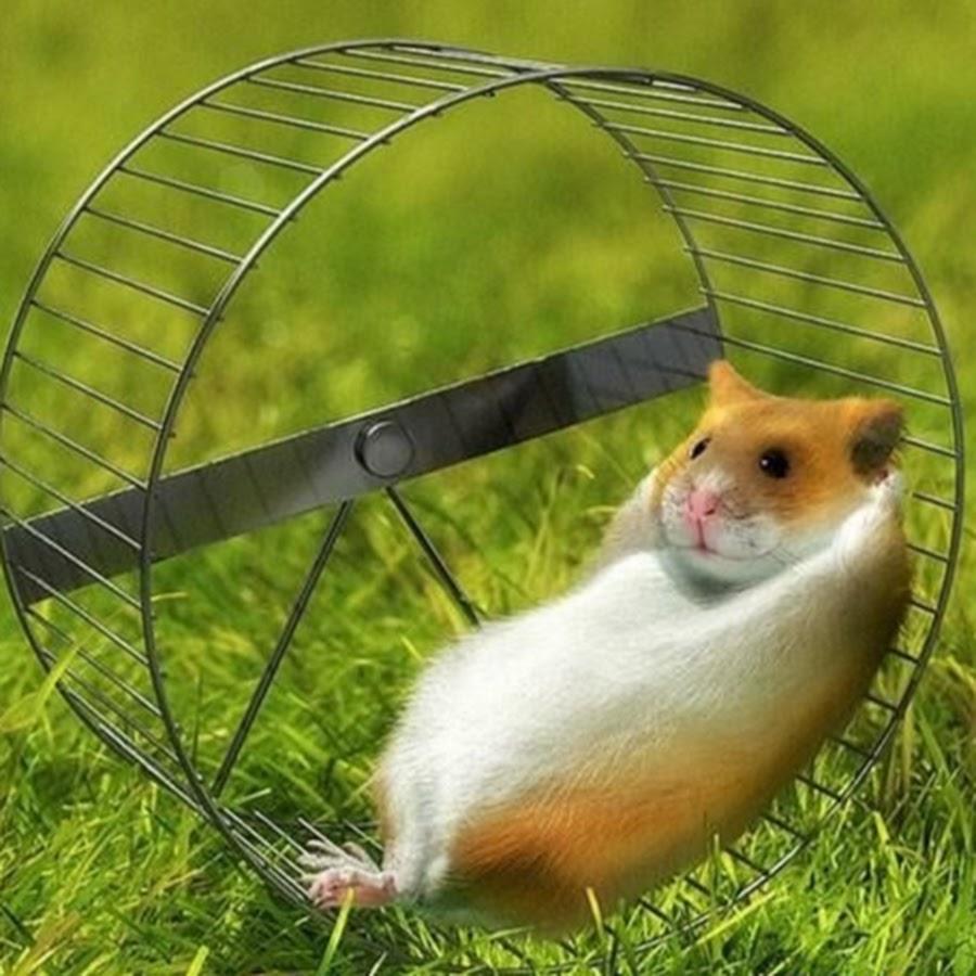 считают, смешные картинки про белку в колесе многие