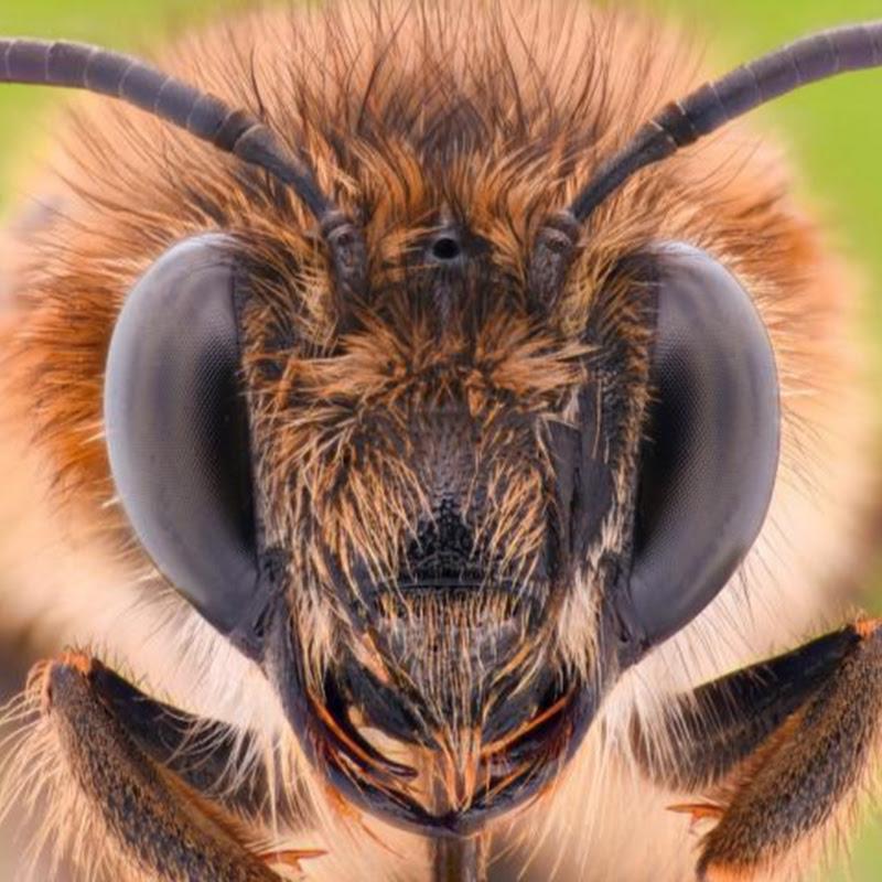 Learn beekeeping basics