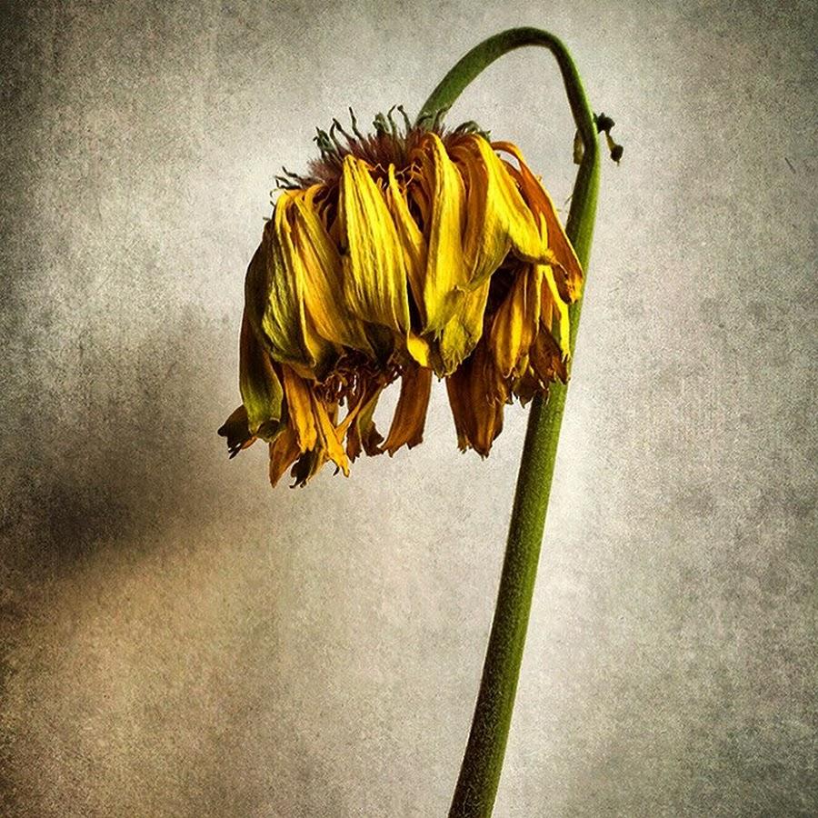 этой картинка умирающего растения фруктов