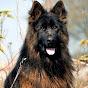 Dogs for sale./01228075229/كلاب للبيع