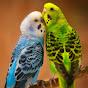 Muhabbe Kuşu Dersleri