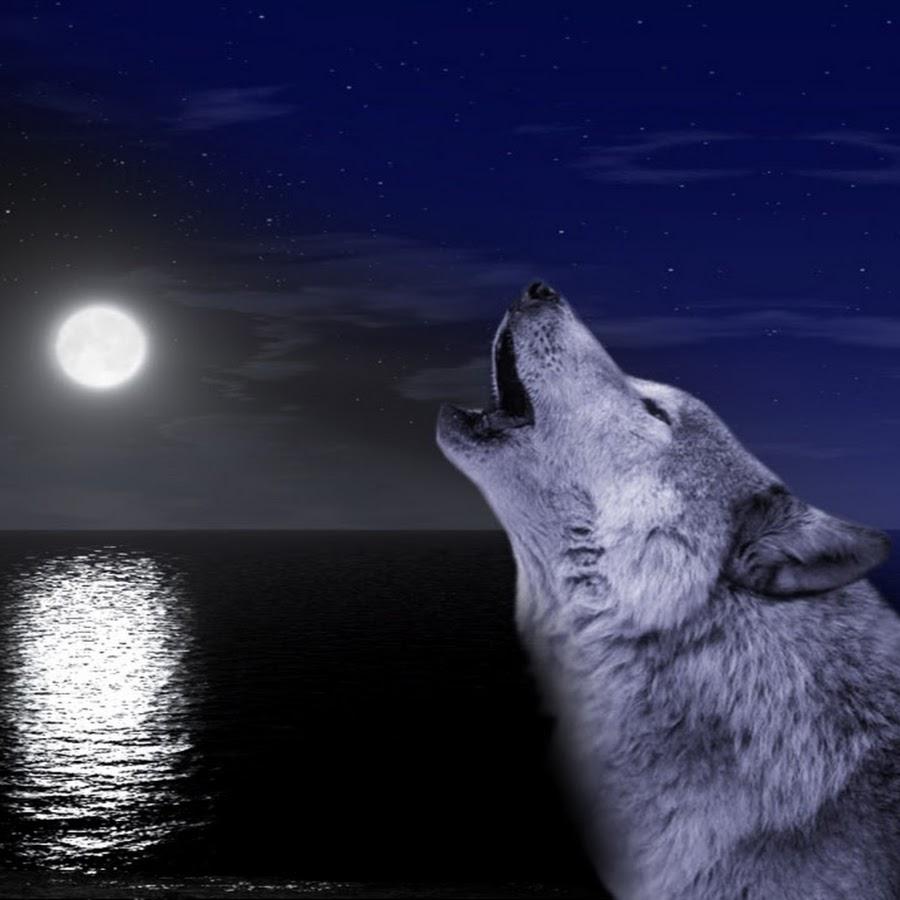 нравится картинки волчица под луной вес