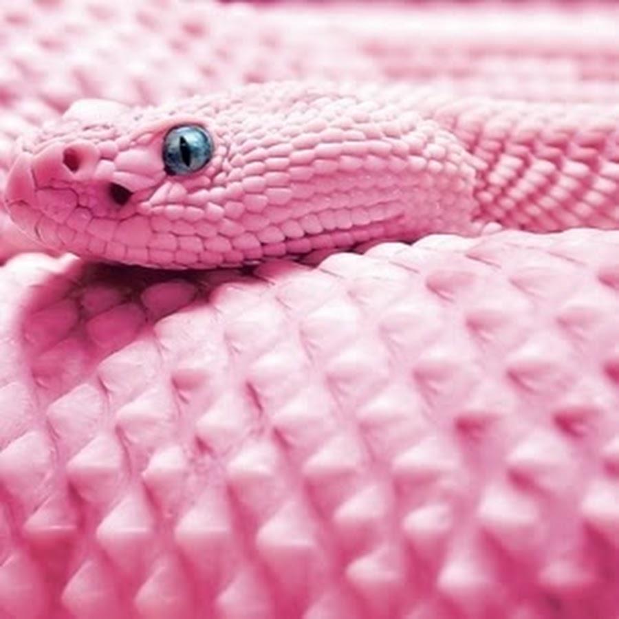 Розовая змея картинка
