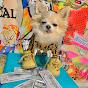 Cartel Chihuahua