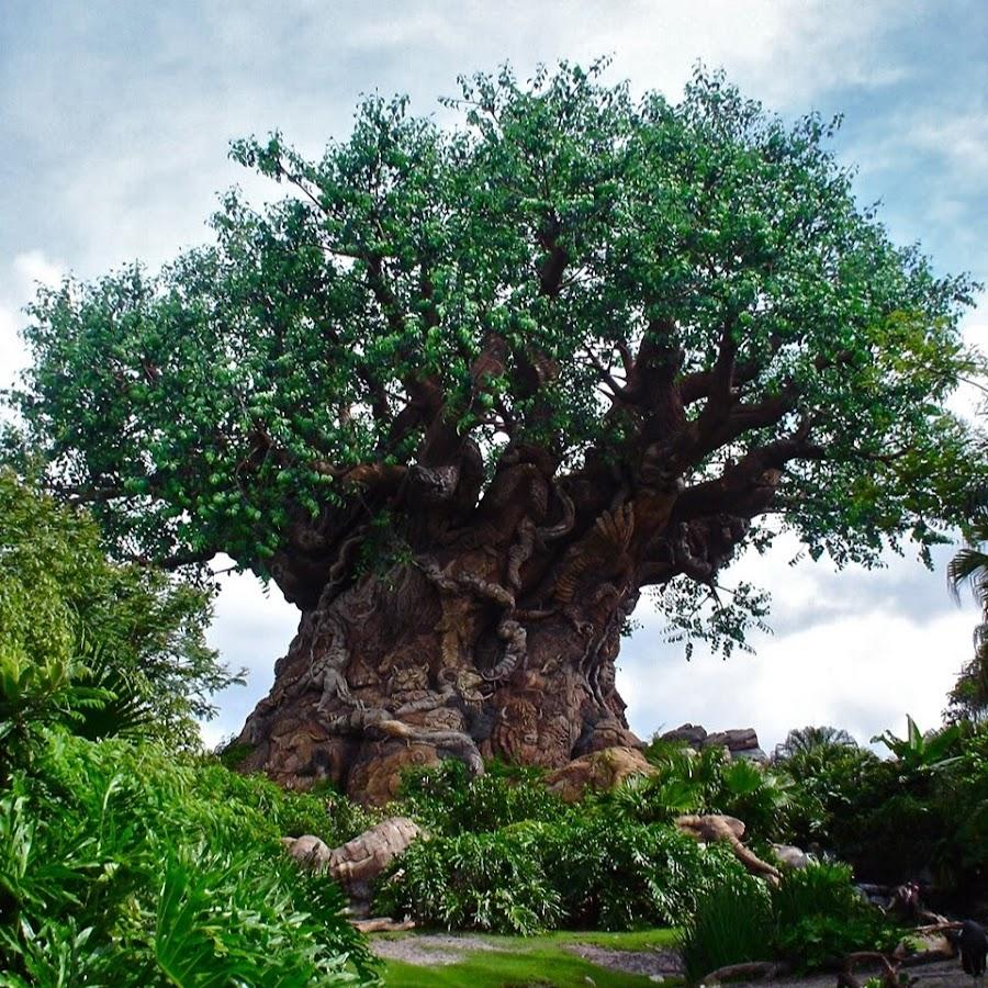 венге дерево фото растет вернули ремонта