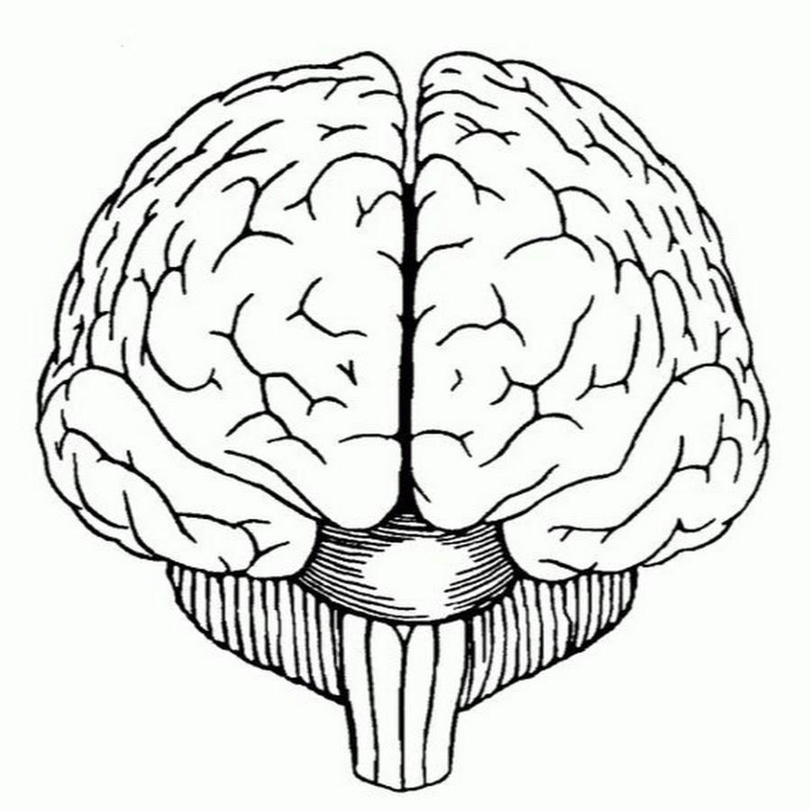 Мозг картинки рисунки