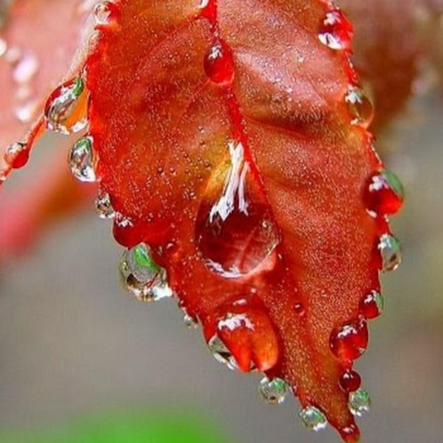 определенный фотокто осенняя роса лук измельчаем