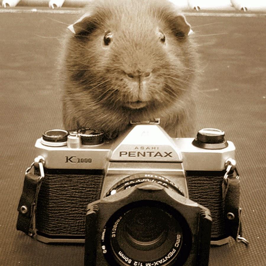 достаточно открытки с камерой откроете для себя