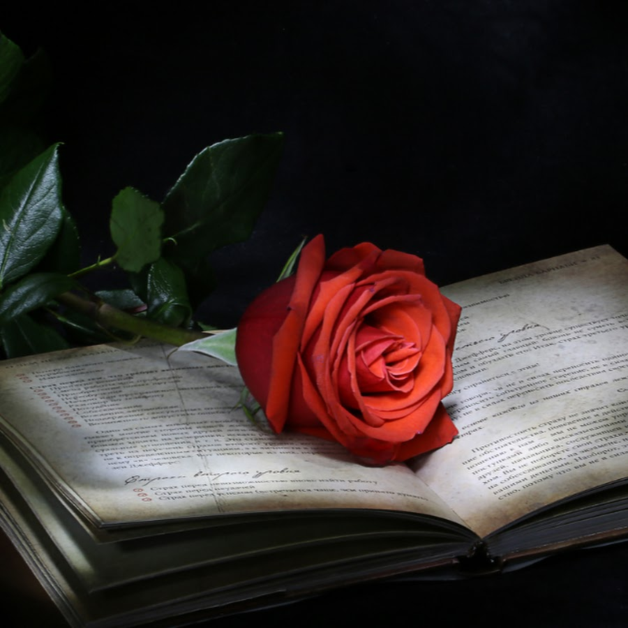 нас розы для писателя открытка такое