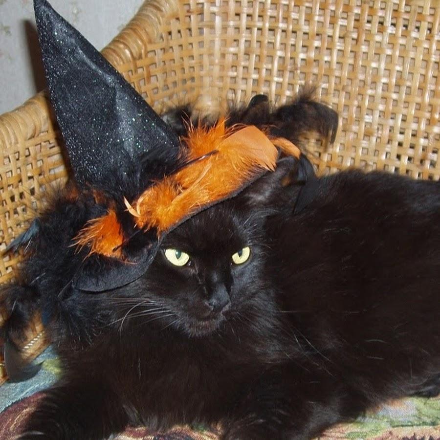 Magical Mongrel Cats