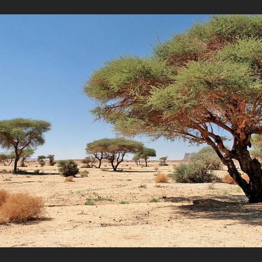 даже дерево ситтим фото того