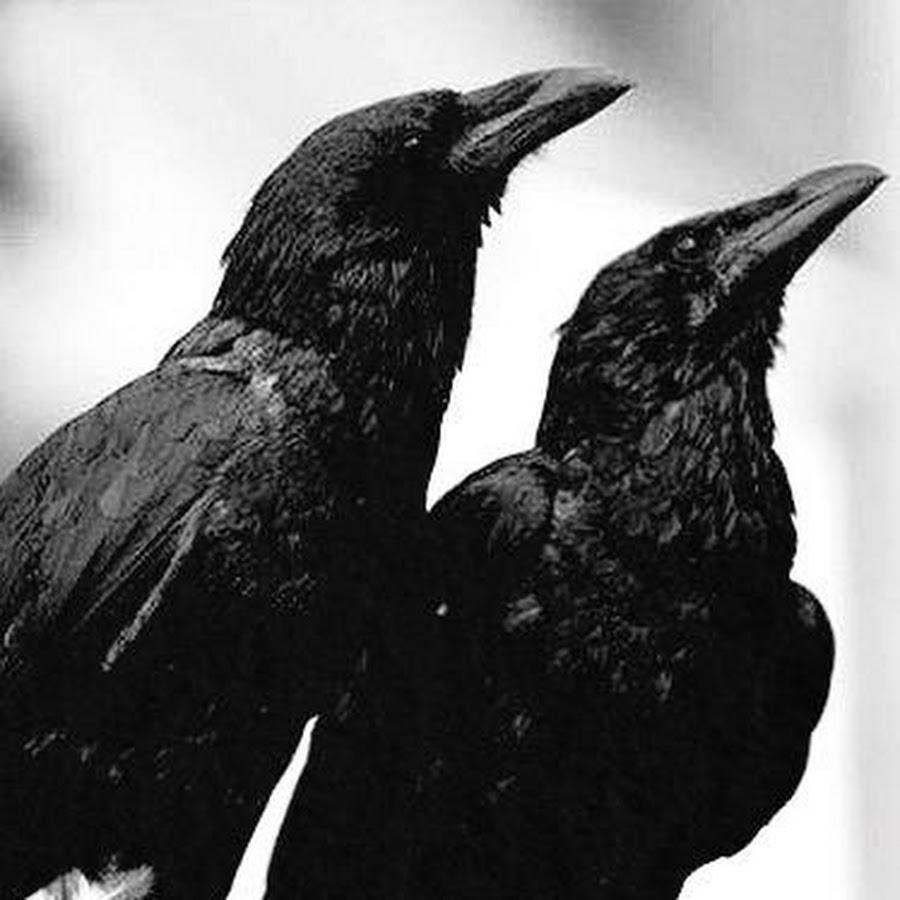 самом картинки черного ворона черно белые для вышивки