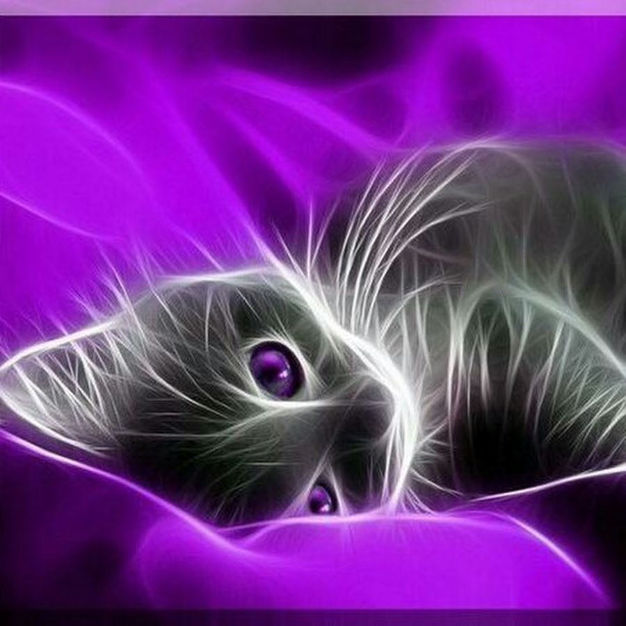 Картинка фиолетовый котенок