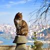 Amazing Cat Videos