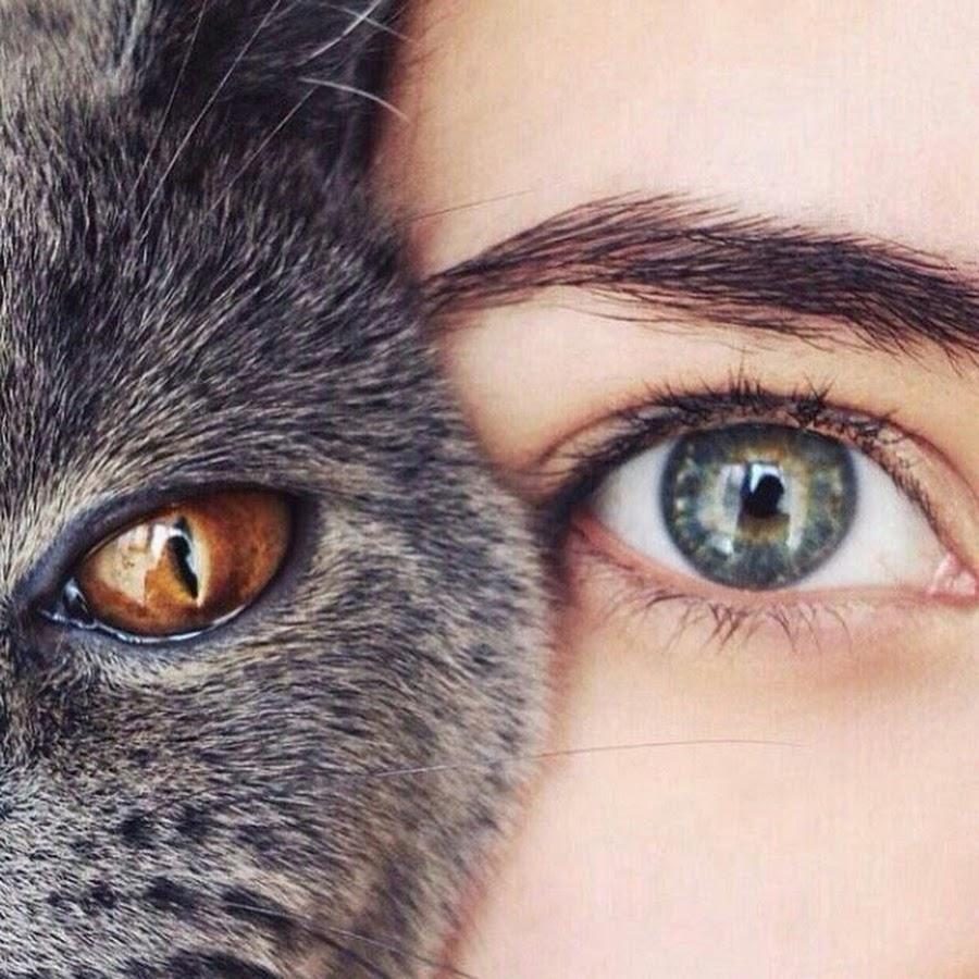 картинка глаз человека и кота можете приобрести