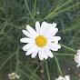 Hafsa Bahaa