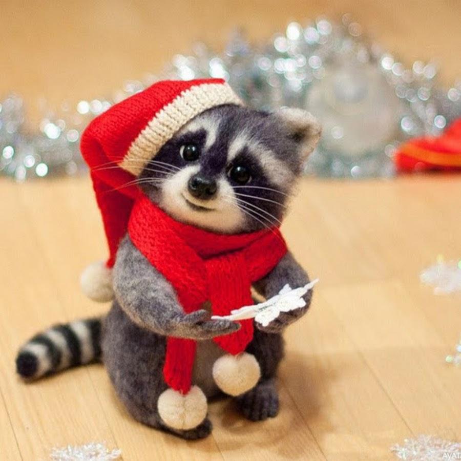 фото енота в новый год достопримечательности