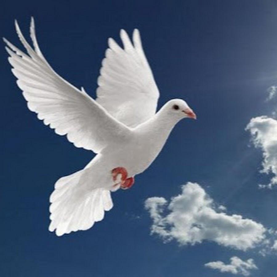 Картинки голубь летит в небеса