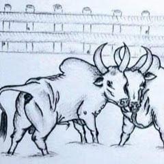 วัวชน 2020