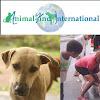 AnimalsInternational
