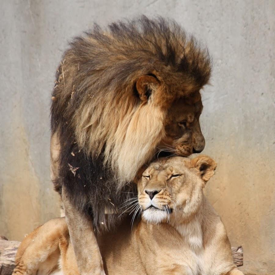 Картинки лев с надписью мужики тогда и сейчач