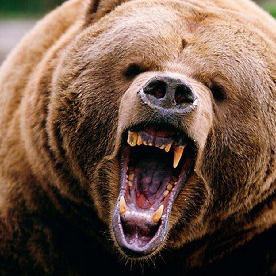 кто читает фото медведя который злится литвеееее, там тебе