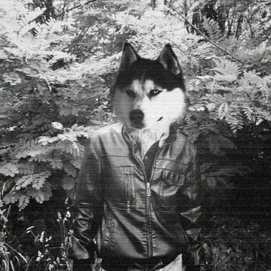 приемлю, картинки людей с головой волка на аву глаза кухня серый