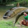 FEELING ANIMAL& Fishing
