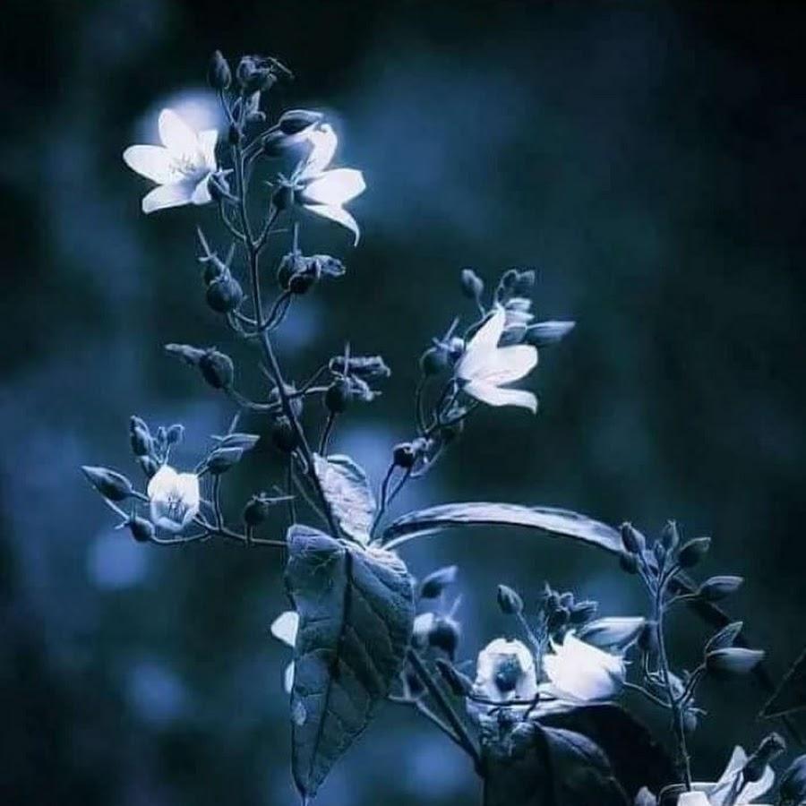 Картинки цветы ночные
