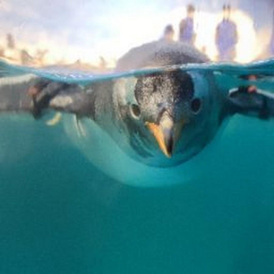 小戚_小戚 - YouTube