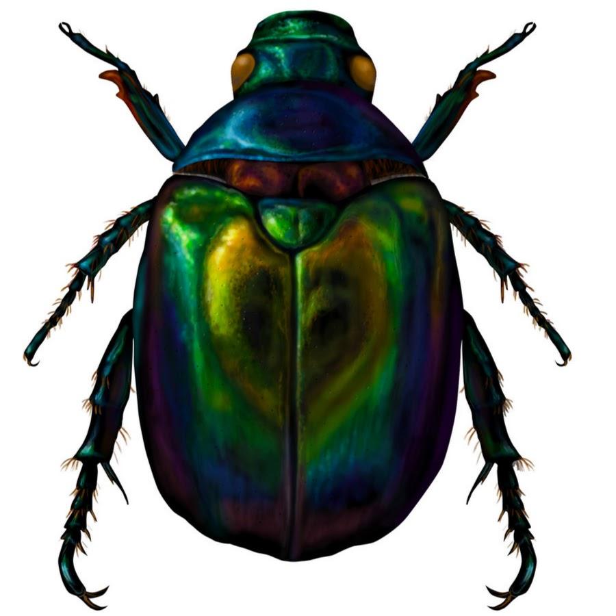 подобное красивые рисунки жуков есть чем заняться