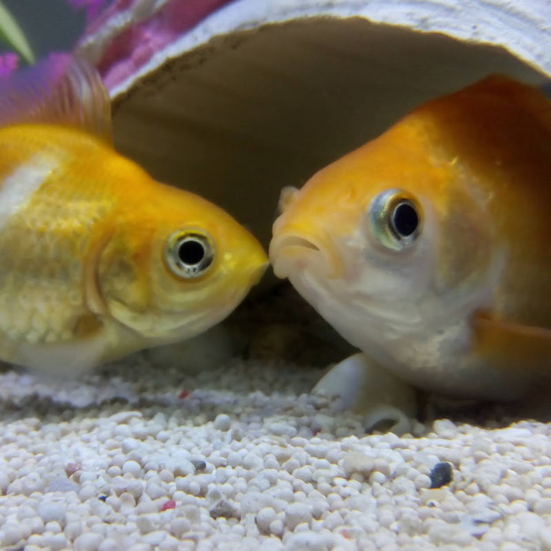 Goldie and Finn (goldie-and-finn)