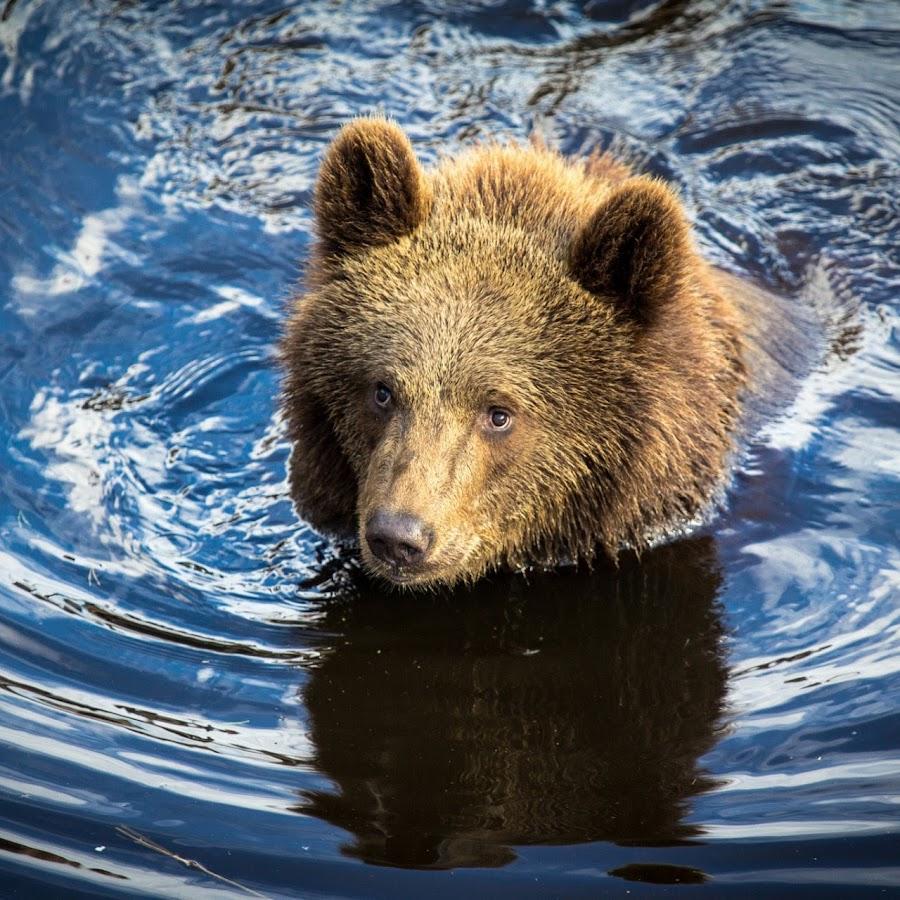 скины майнкрафт медвежонок #5