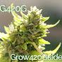 Grow420Guide