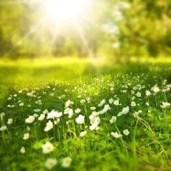 Help Full Pro