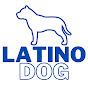 Latino Dog