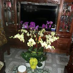 Hùng Nguyễn Bá
