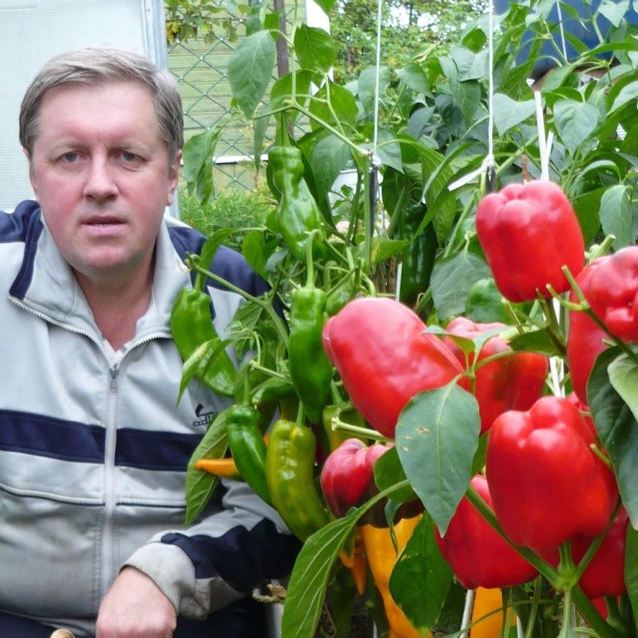 фото грядок помидоров перцев сдачи-приемки оказанных