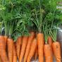 6 Top Survival Gardening Crops ~~Global Food Shortages? ~~ Crops You MUST Grow! AATXAJyHbgOEp0b662q8jFS2ENg4E7FDxEe8EBLU3g=s88-c-k-c0xffffffff-no-rj-mo